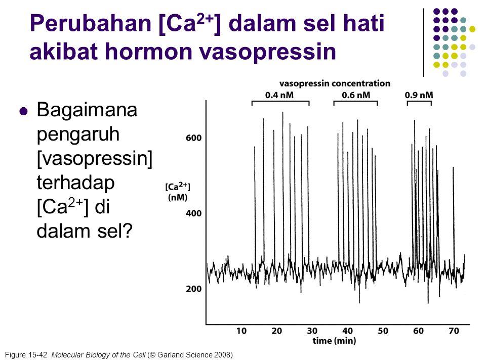 Perubahan [Ca2+] dalam sel hati akibat hormon vasopressin